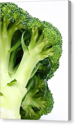 Broccoli Canvas Print by Gaspar Avila