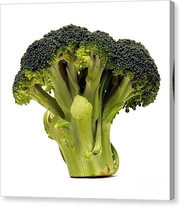 Broccoli  Canvas Print by Olivier Le Queinec