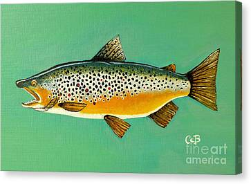 Brown Trout Canvas Print by Chad Berglund