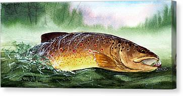 Brown Trout Taking A Fly Canvas Print by Sean Seal