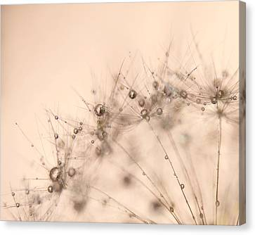 Bubbly Canvas Print by Amy Tyler