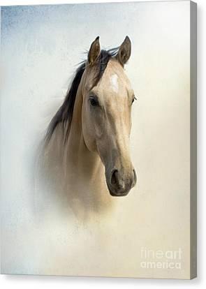 Buckskin Beauty Canvas Print by Betty LaRue