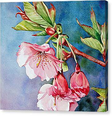 Budding Blossoms Canvas Print by Diane Fujimoto