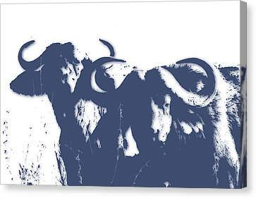 Buffalo 2 Canvas Print by Joe Hamilton