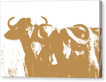 Buffalo 3 Canvas Print by Joe Hamilton