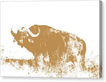Buffalo 4 Canvas Print by Joe Hamilton