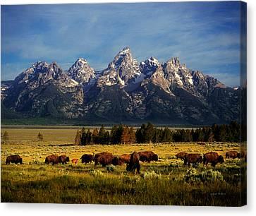 Buffalo Under Tetons Canvas Print by Leland D Howard
