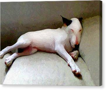 Bull Terrier Sleeping Canvas Print by Michael Tompsett