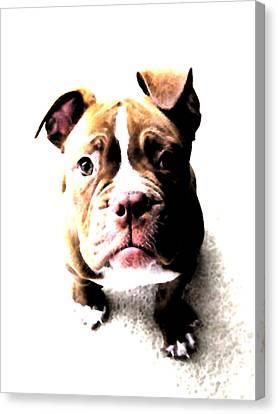 Bulldog Puppy Canvas Print by Michael Tompsett