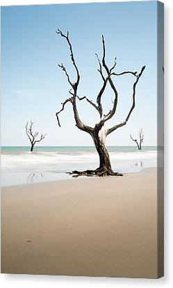 Bulls Island C-x Canvas Print by Ivo Kerssemakers