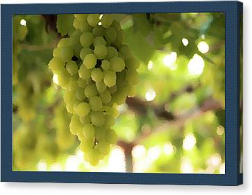 Bunch Of Grapes Canvas Print by Shay Weiss