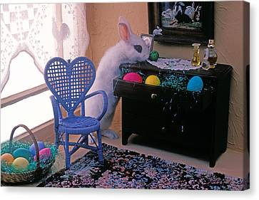 Bunny In Small Room Canvas Print by Garry Gay
