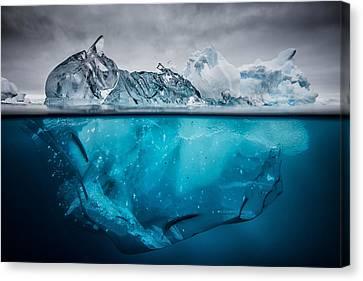 Buoyancy Canvas Print by Justin Hofman