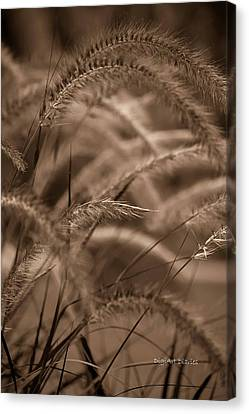 Burgundy Giant Canvas Print by DigiArt Diaries by Vicky B Fuller