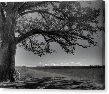 Burr Oak Tree Canvas Print by Jane Linders