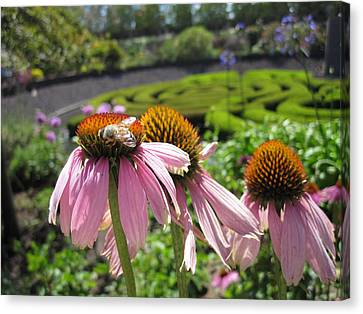 Busy Bee Canvas Print by Nancy Ingersoll