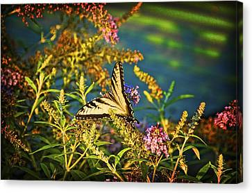 Butterfly Bandit Canvas Print by Nick Roberts