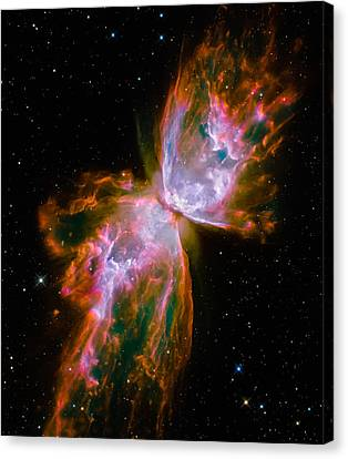 Butterfly Emerges From Stellar Demise Canvas Print by Marco Oliveira