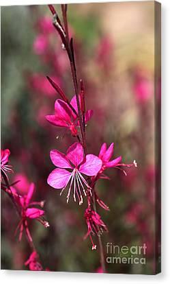 Butterfly Flowers In Pink  Canvas Print by Joy Watson