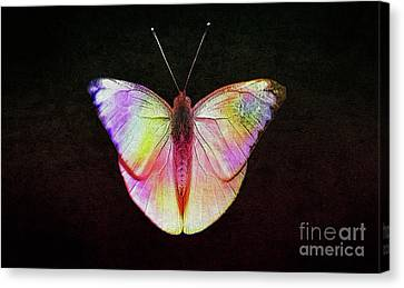 Butterfly In Retro  Canvas Print by Manjot Singh Sachdeva