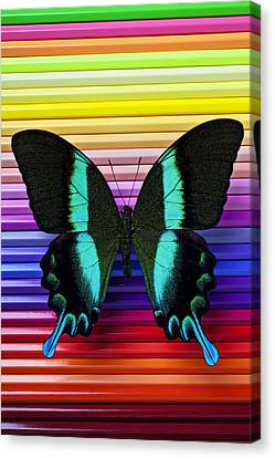 Butterfly On Colored Pencils Canvas Print by Garry Gay
