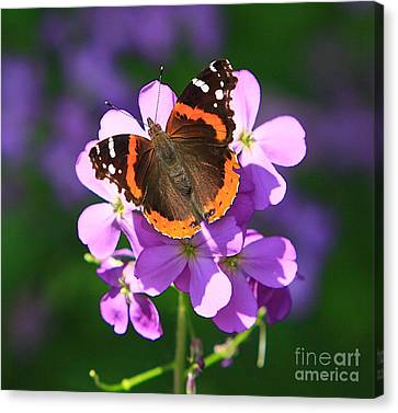 Butterfly Canvas Print by Robert Pearson