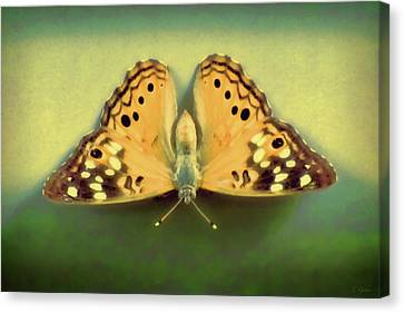 Butterfly Canvas Print by Tony Grider