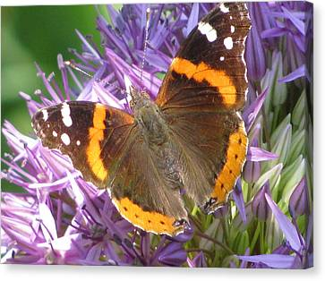 Butterfly With Allium Canvas Print by Alfred Ng