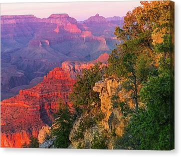 Canyon Allure Canvas Print by Mikes Nature