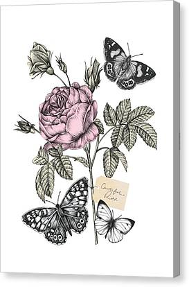 Cabbage Rose Canvas Print by Stephanie Davies