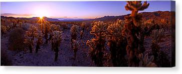 Prickly Canvas Print by Chad Dutson