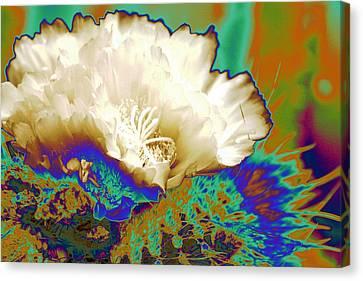 Cactus Moon Flower Canvas Print by  Andrea Lazar
