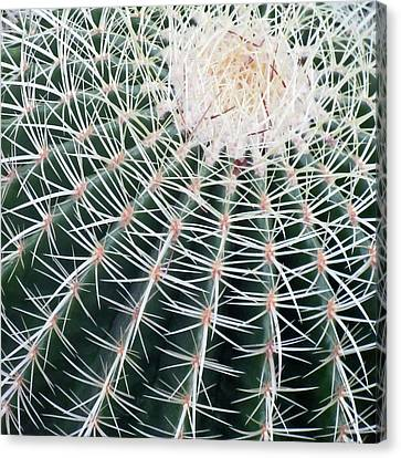Cactus Square Edition Canvas Print by Tony Grider