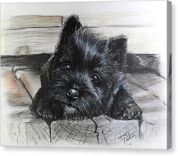 Cairn Terrier Canvas Print by Daniele Trottier