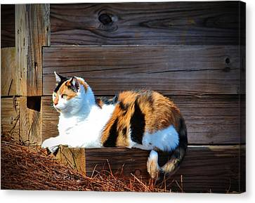 Calico Cat On The Steps Canvas Print by Cynthia Guinn