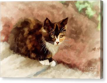 Calico Kitten Canvas Print by Lois Bryan