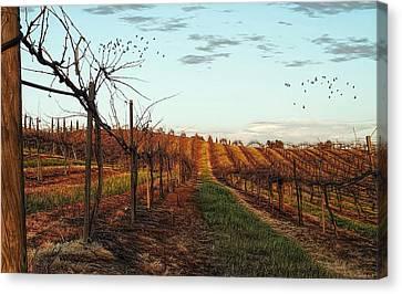 California Vineyard In Winter Canvas Print by Glenn McCarthy Art and Photography