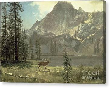 Call Of The Wild Canvas Print by Albert Bierstadt