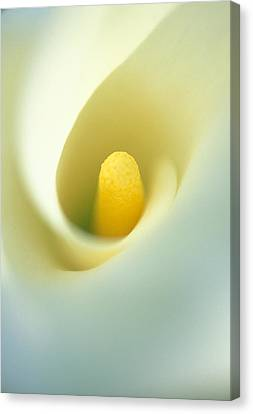 Calla Canvas Print by Kathy Yates