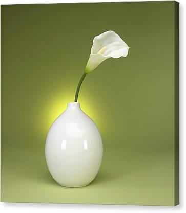 Calla Lily And Vase Canvas Print by Tony Ramos