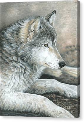 Calm Wolf Canvas Print by Carla Kurt