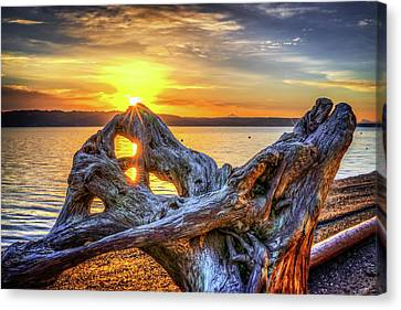 Camano Sunrise Canvas Print by Spencer McDonald