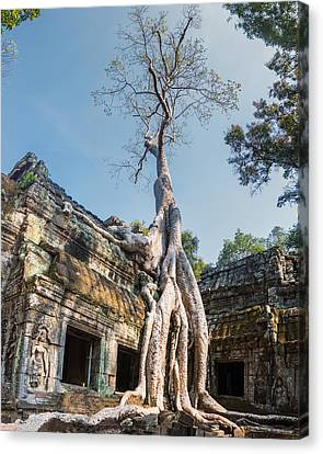 Cambodia Angkor Wat Tree Roots Canvas Print by Cory Dewald
