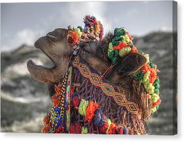 Camel Canvas Print by Joana Kruse