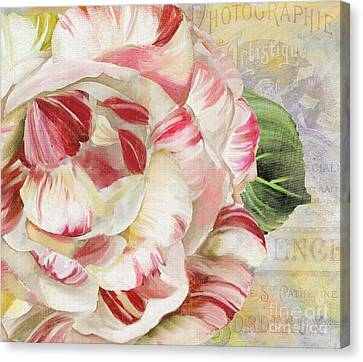 Camellia Canvas Print by Mindy Sommers