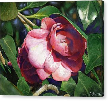 Camellianne Canvas Print by Andrew King
