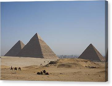 Camels At The Great Pyramids At Giza Canvas Print by Taylor S. Kennedy