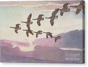 Canada Geese In Spring Canvas Print by Newell Convers Wyeth