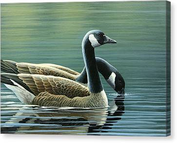 Canada Geese Canvas Print by Mark Mittlesteadt