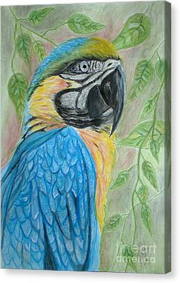 Blue And Yellow Macaw Canvas Print by Cybele Chaves
